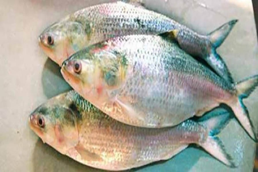 Mobile court fines fishermen in Bhola for catching hilsa