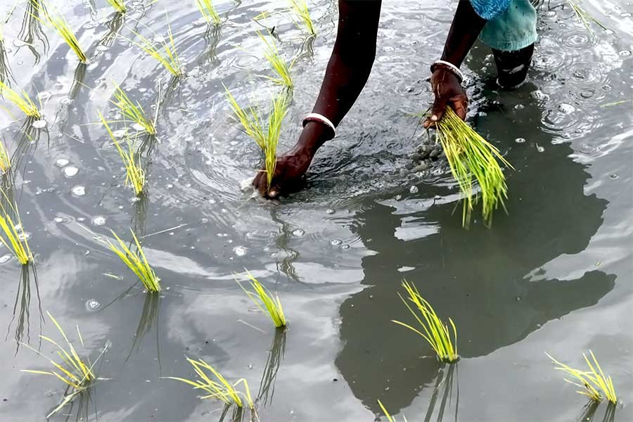 President for developing stress tolerant crops