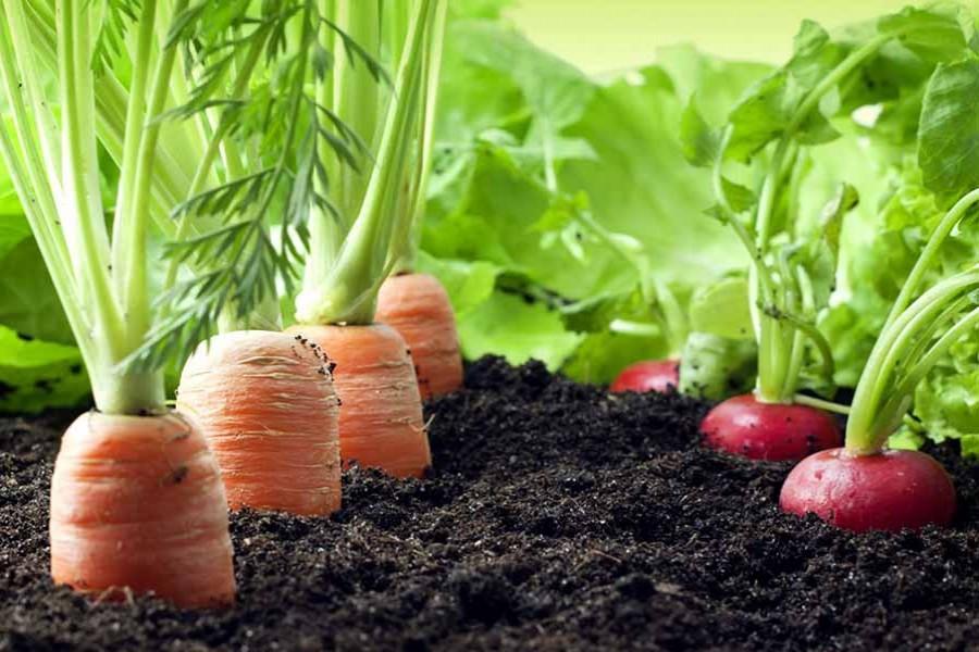 'Focus on organic farming for safe food'