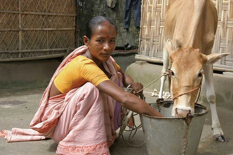 Labour-leisure trade-off in rural Bangladesh