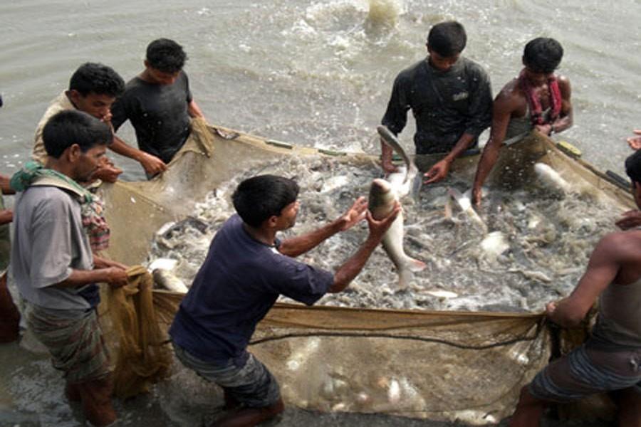 Raising output of indigenous fish