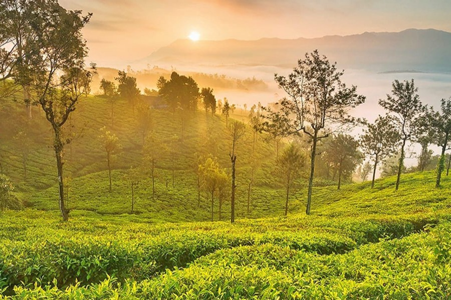 Ooty -Queen of South India