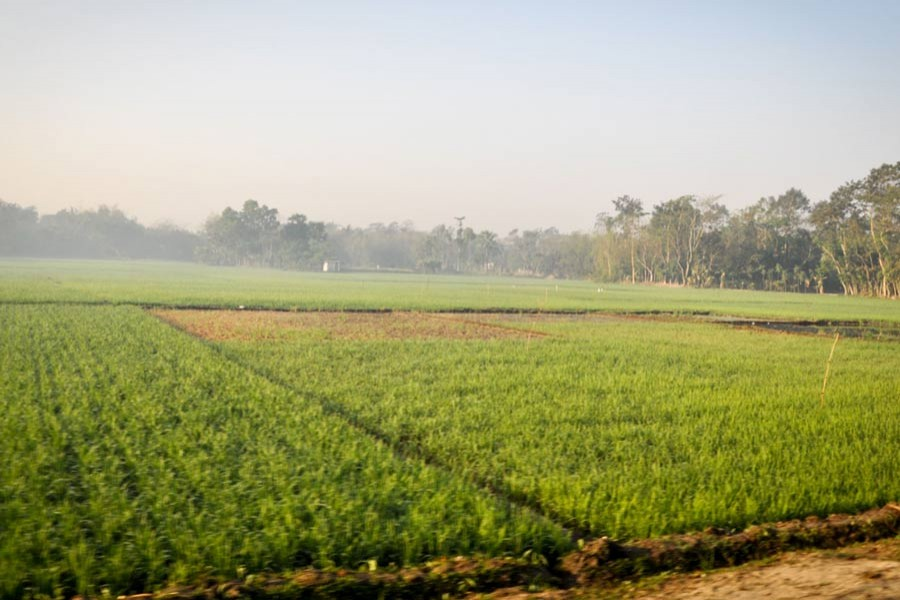 The state of crop insurance in Bangladesh