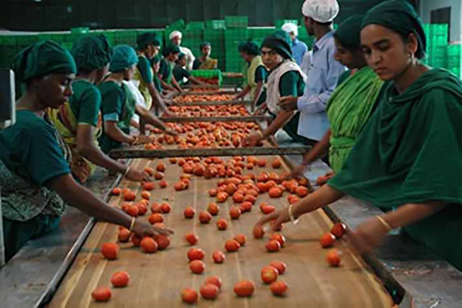 Tapping potential of agro-processing sector