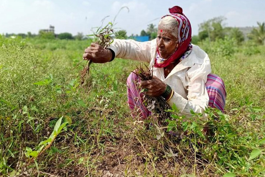 Untimely rains delay India's rural economy recovery