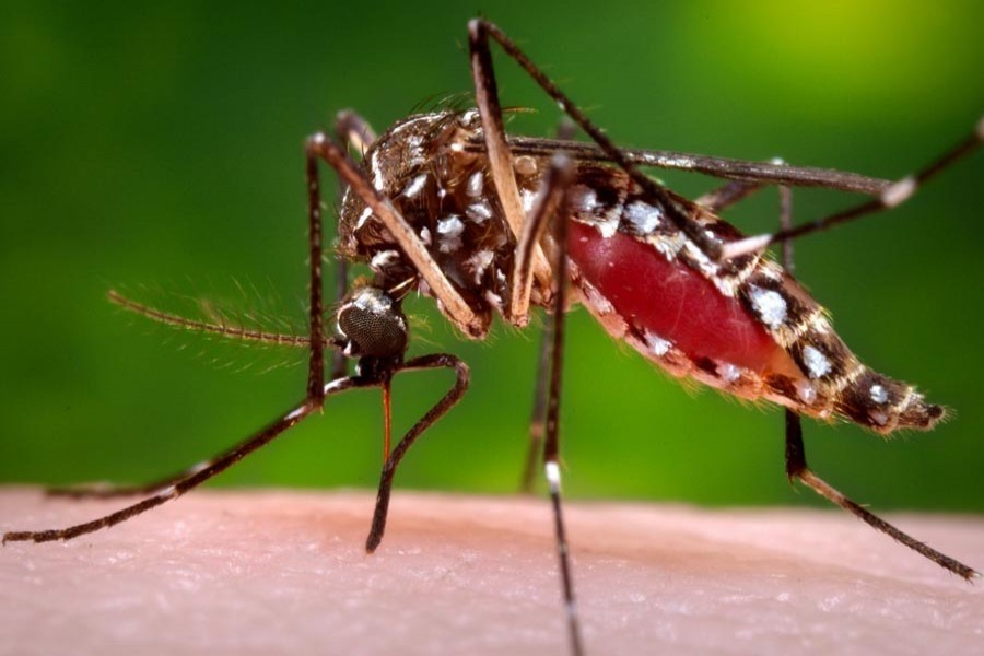 62 new dengue patients hospitalised in 24 hrs