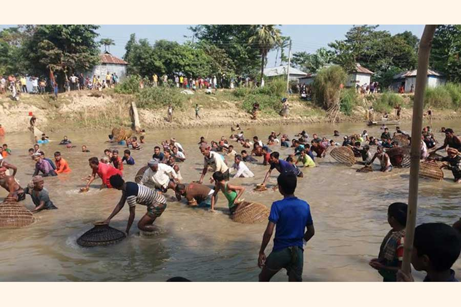 People catching fish in the Kontinala river with the help of the traditional fishing trap 'Polo' at an event Polo Bawa under Juri upazila of Moulvibazar on Sunday   	— FE Photo