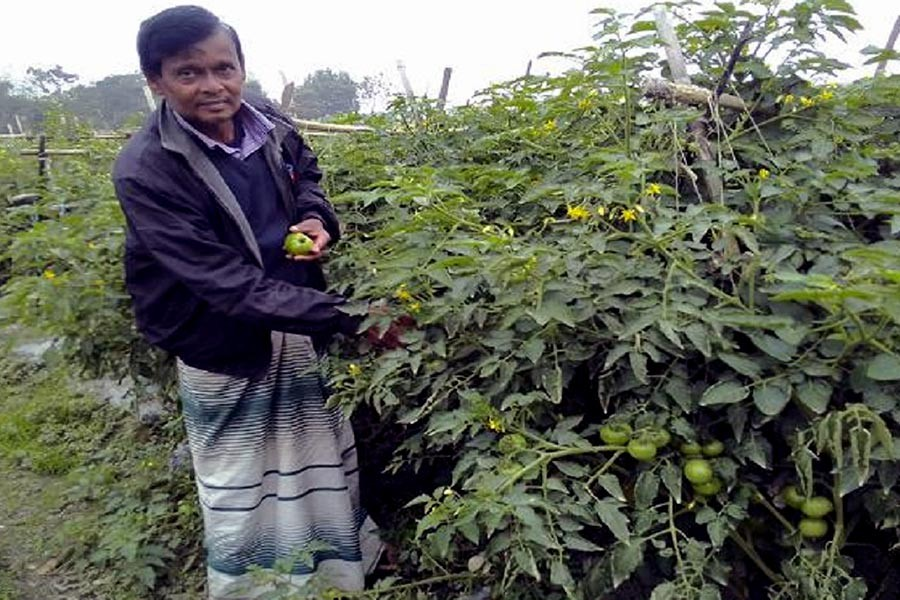 Vegetable farming creates employment opportunity for B'baria youths