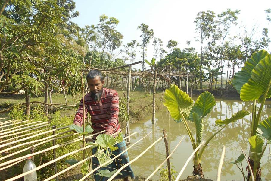 Amirul working at his farm in Magura Sadar upazila    — FE Photo