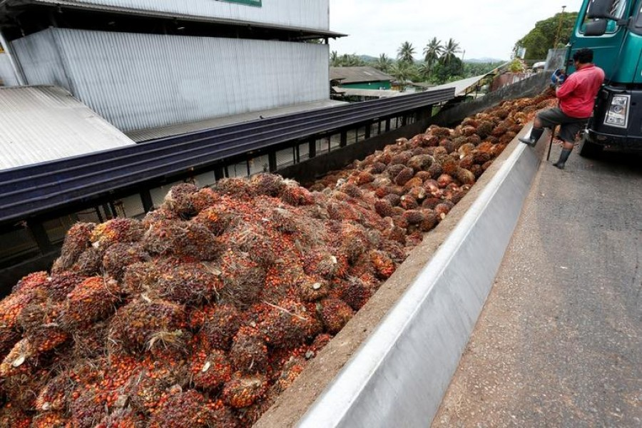 A worker unloads palm oil fruit bunches from a lorry inside a palm oil mill in Bahau, Negeri Sembilan, Malaysia, January 30, 2019. Reuters/Files