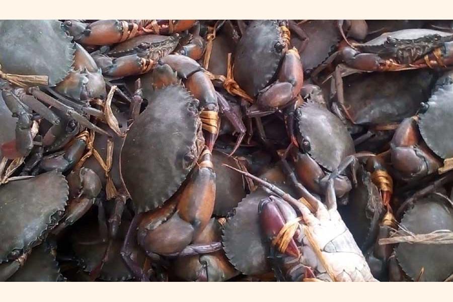 Govt bans crab collection in Sundarbans, adjacent areas