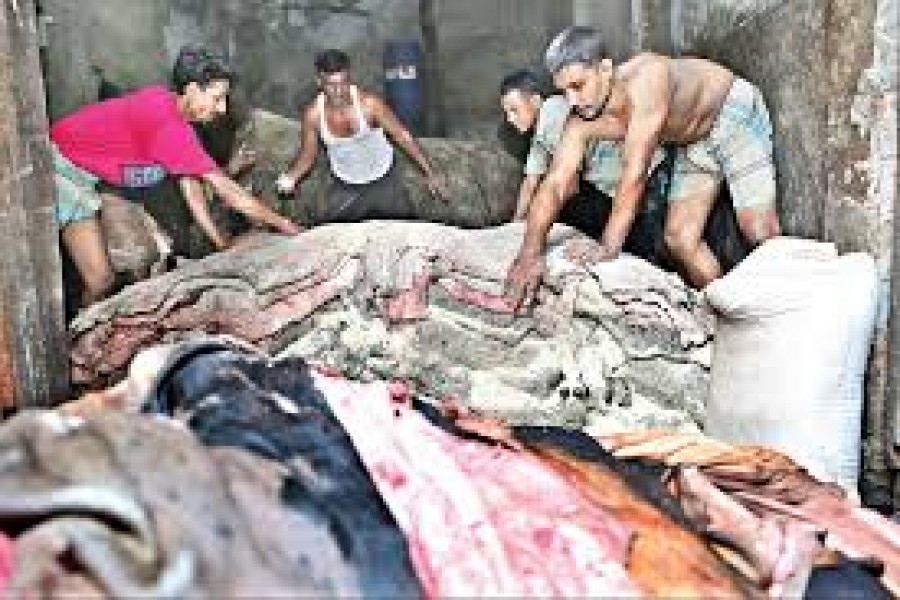 Govt to form body for rawhide management during Eid-ul-Azha