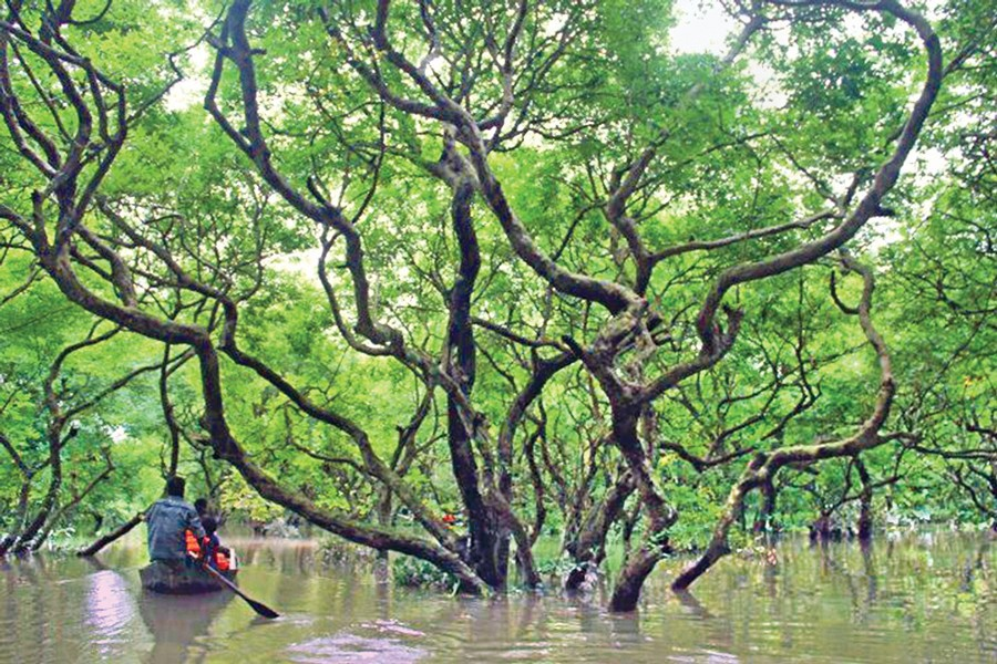 Taking care of the Sundarbans