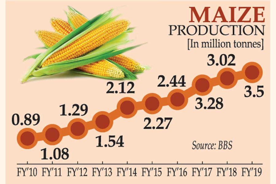 Maize harvest fourfold now