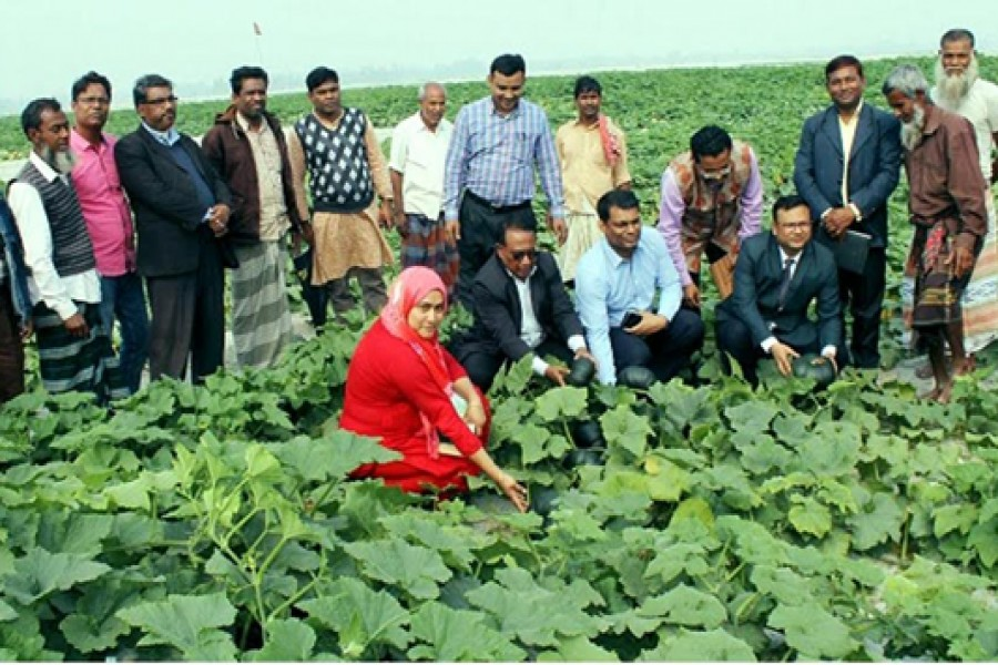 Pesticide-free vegetable farming getting popularity in Rangpur char areas