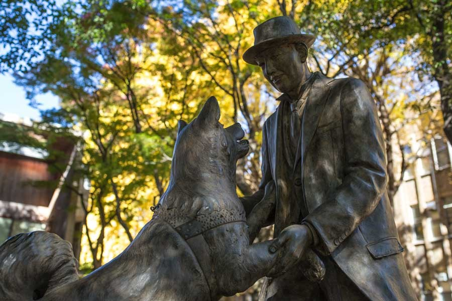 Reunion statue of Hachiko and Professor Ueno: Hachiko was a Japanese dog remembered for his remarkable loyalty to his owner, Ueno, for whom he continued to wait for over nine years following Ueno's death