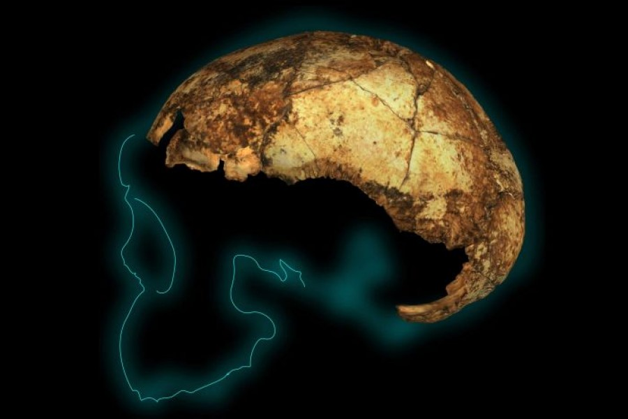 2-million-year-old skull of human ancestor in S Africa unearthed