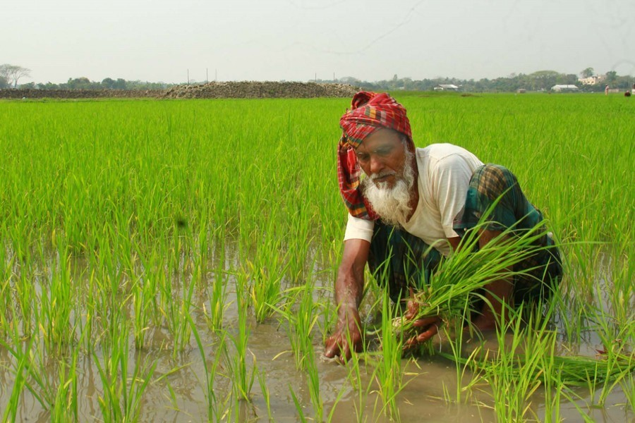 AmCham starts providing assistance to marginal farmers