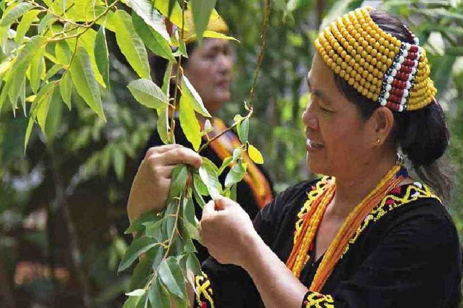 Photo courtesy: UN News/ Sarawak Biodiversity Centre