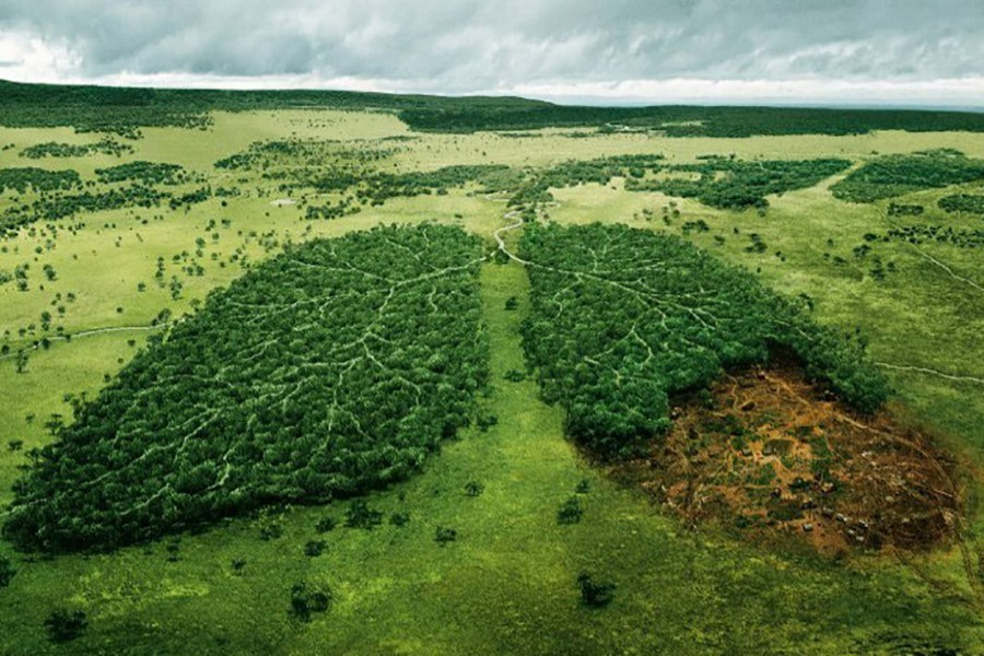 Facing the sixth great extinction
