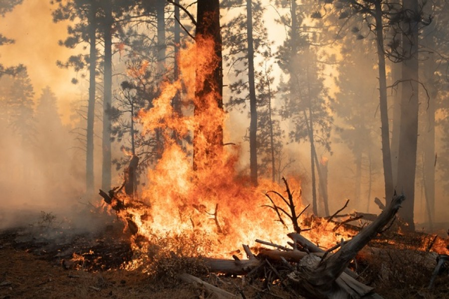 Trees are ablaze from the Brattain Fire in the Fremont National Forest near Paisley, Oregon, US, September 19, 2020 — Reuters